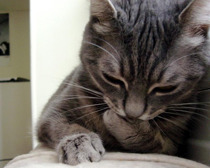 essay on my favorite animal cat